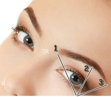 La structure du sourcil